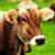 Обязательная маркировка молочной продукции под большим вопросом: решили, что дорого и неэффективно